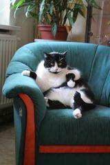 unser dicke Katze
