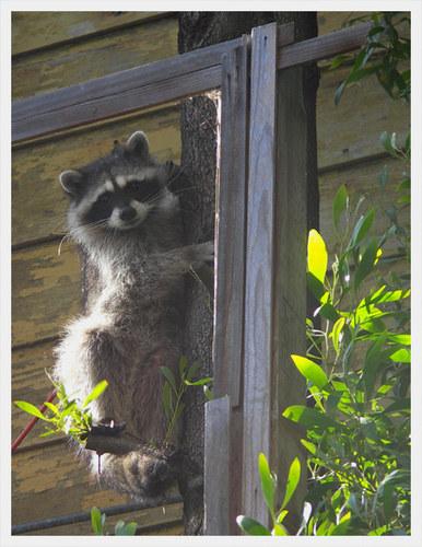 unser frecher Nachbar