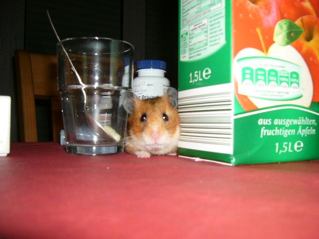 """Unser Hamster """"Bifi"""""""
