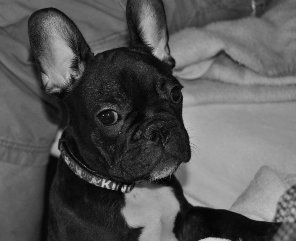 Unser Hund!