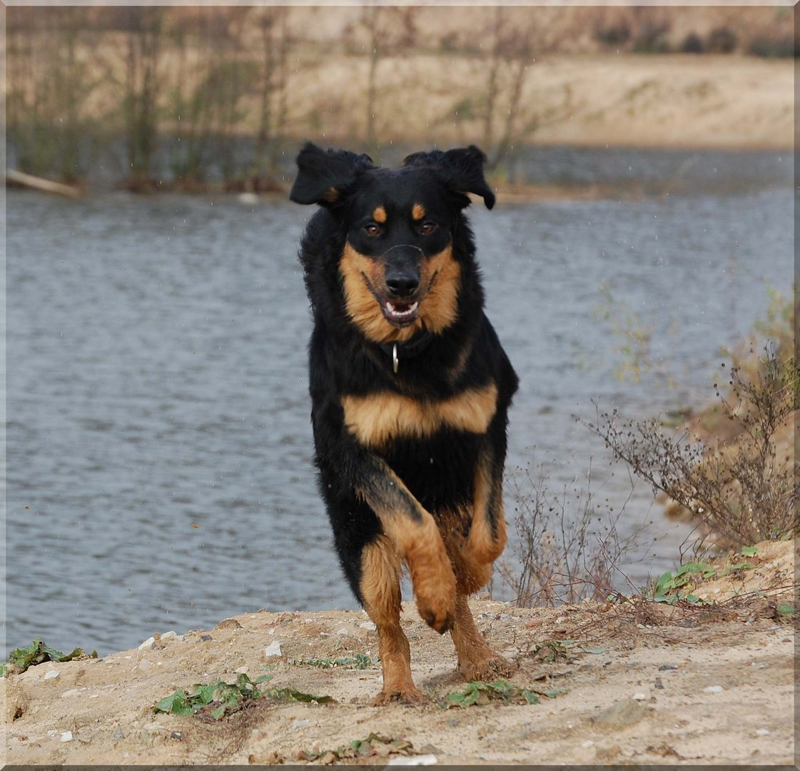 Unser Hund Astor