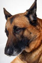 Unser Hund im Studio von Papa