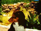 Unser Hund Meilo in Kroatzien...