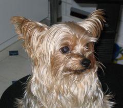 Unser Hund Scotty