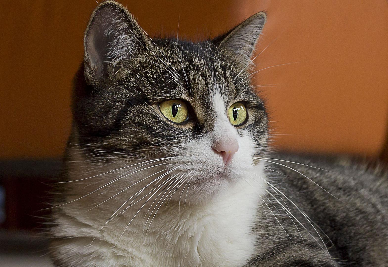 "Unser Katze ""Perlina"""