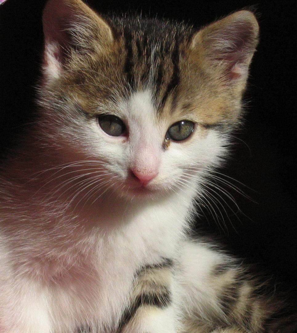 unser Katzennachwuchs1