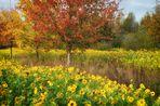 Unser kleines Sonnenblumenfeld (2)