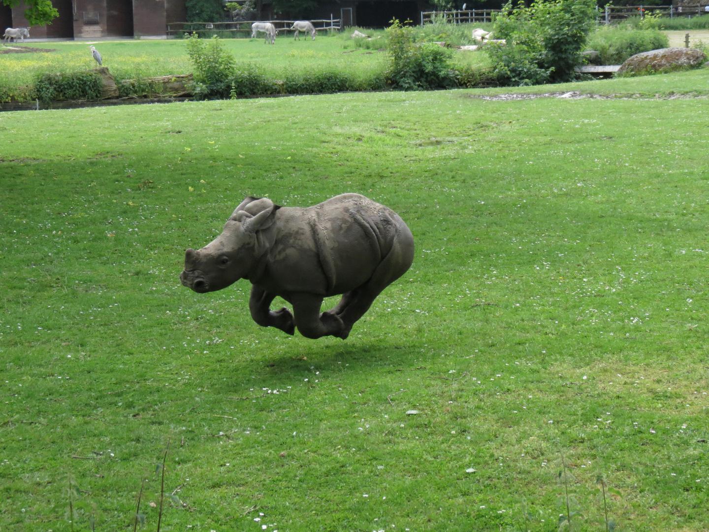 unser Nachwuchs im Zoo