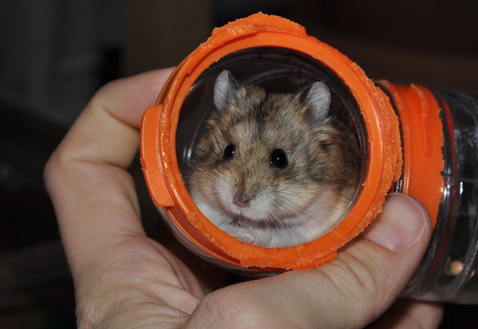 """Unser neuer Hamster """"Otto"""""""