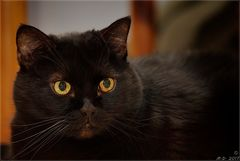 Unser pfundiges Katzenmädchen Lucky-Dickie ....