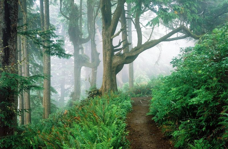 unser Schwarzwald