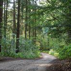 Unser Waldweg