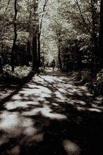 unser Weg ... ´11 / IMG_8754