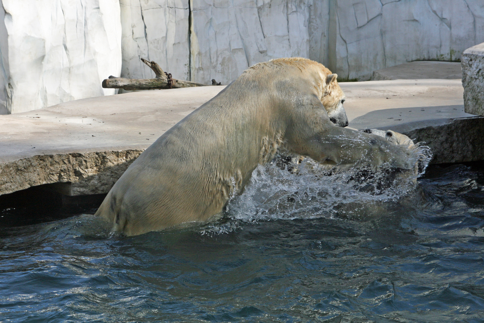 unsere Eisbären