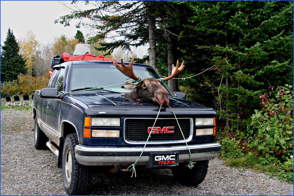 Unsere erste Begegnung mit einem Elch..........sehr makaber, die Kanadier