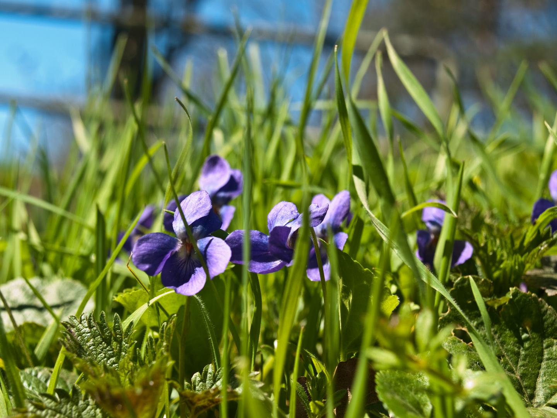 Unsere ersten Frühjahrsboten