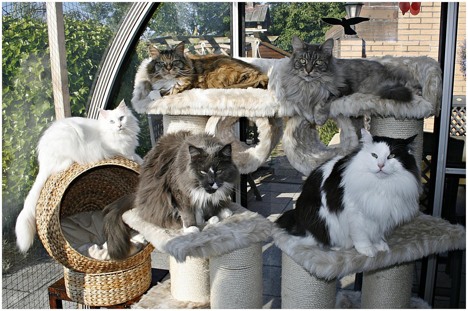 Unsere Fantastic Five auf ihrem Sonnendeck :-)))