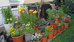Unsere Gartengestaltung im großen Hof  mit 6 Wohnungen und einer großen Wiese und Parkplätzen