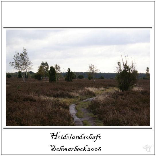 unsere Heidelandschaft in Schmarbeck