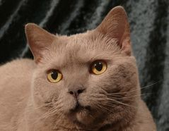 Unsere Katze 1