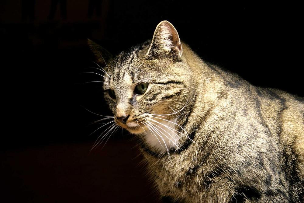 Unsere Katze im Rampenlicht