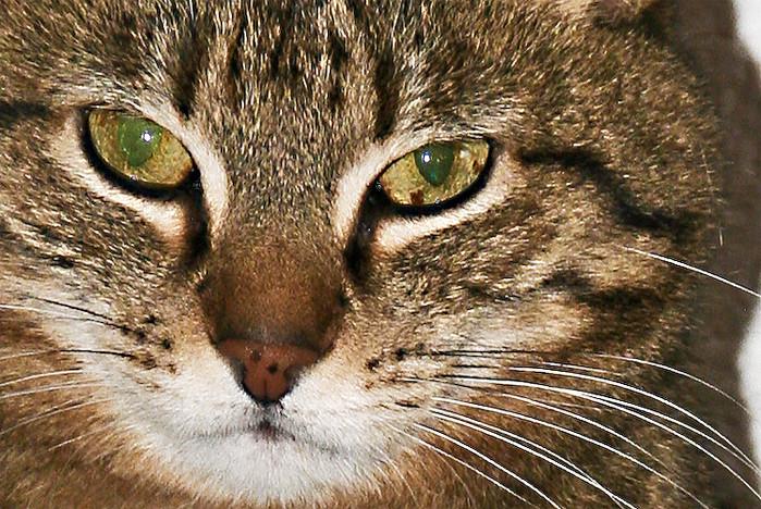 Unsere Katze - Krümel: Augenblicke