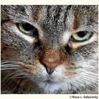 Unsere Katze TIGRIS, hautnah