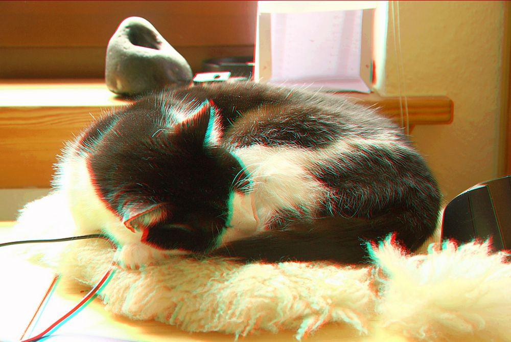 unsere Katze Tinga 3D