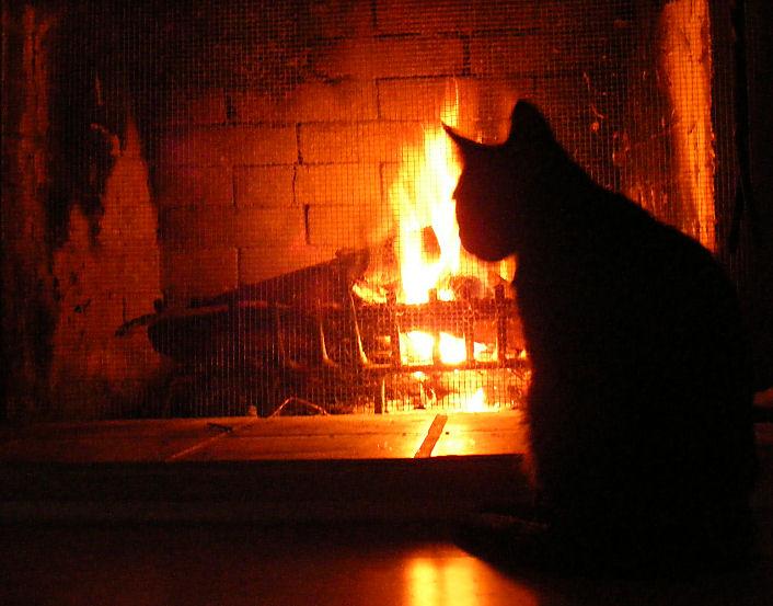 Unsere Katzen lieben das Feuer im Kamin