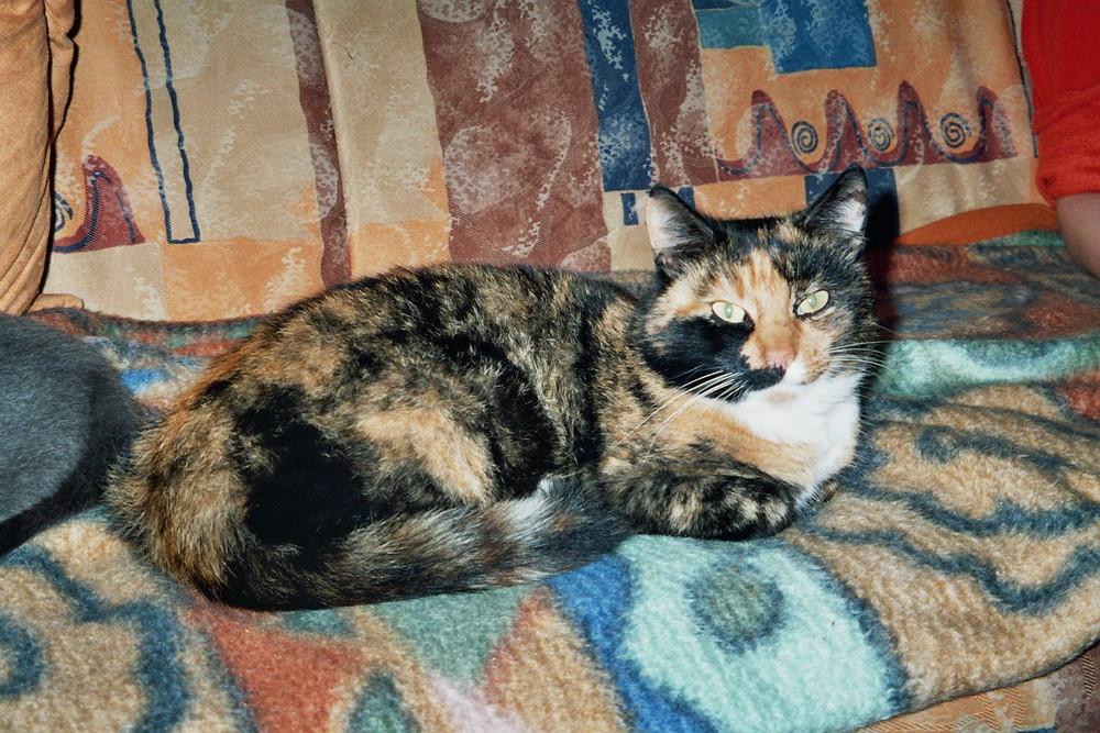 Unsere Katzenmama Fritzi