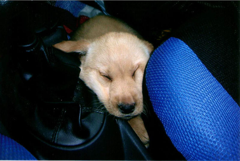 Unsere Kia schlafend im Auto ;-)