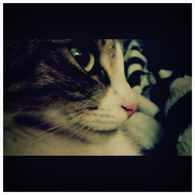 Unsere Kitty