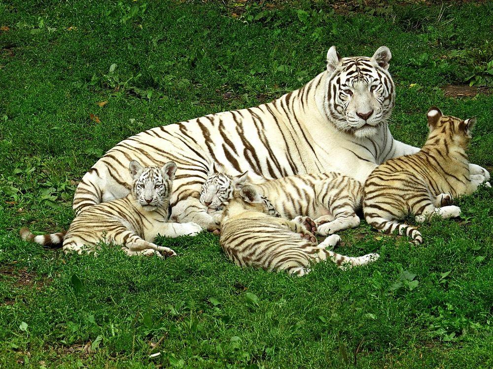 Unsere kleine Tigerfamilie