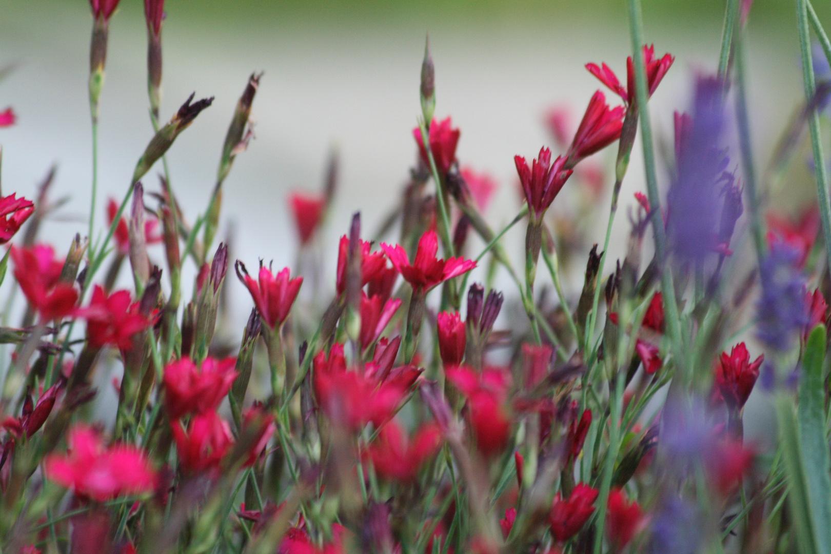 Unsere Kräuterschnecke - in Blüte