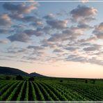 Unsere schöne Pfalz