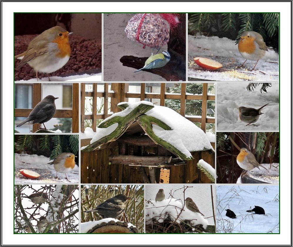 Unsere Vogelwelt im Winter