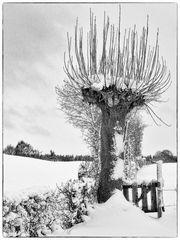 Unsere Weide im Winter A