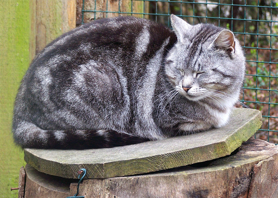 Unsere Zookatze, Namens Frau Katze