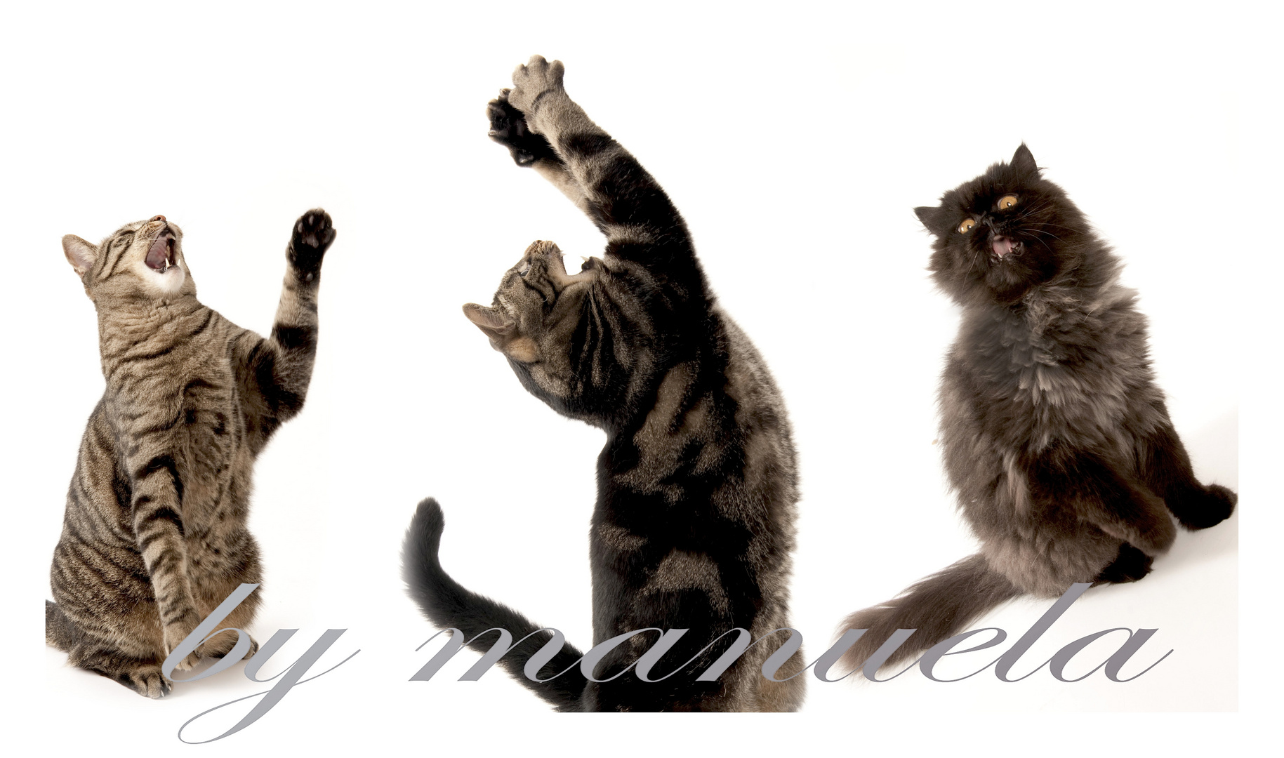 unseri Katzä