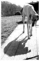 Unsicher-Ein blinder Hund