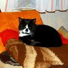 unsre Katze Susi