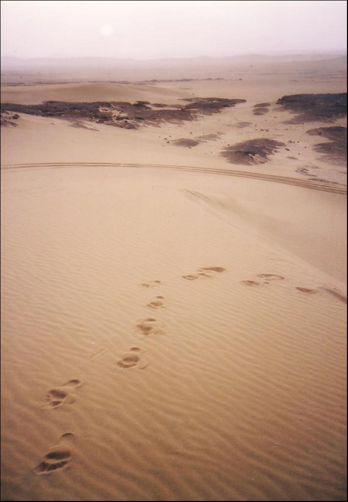 Unsre Spuren im Sand  ...