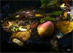 Unstrut-Apfel