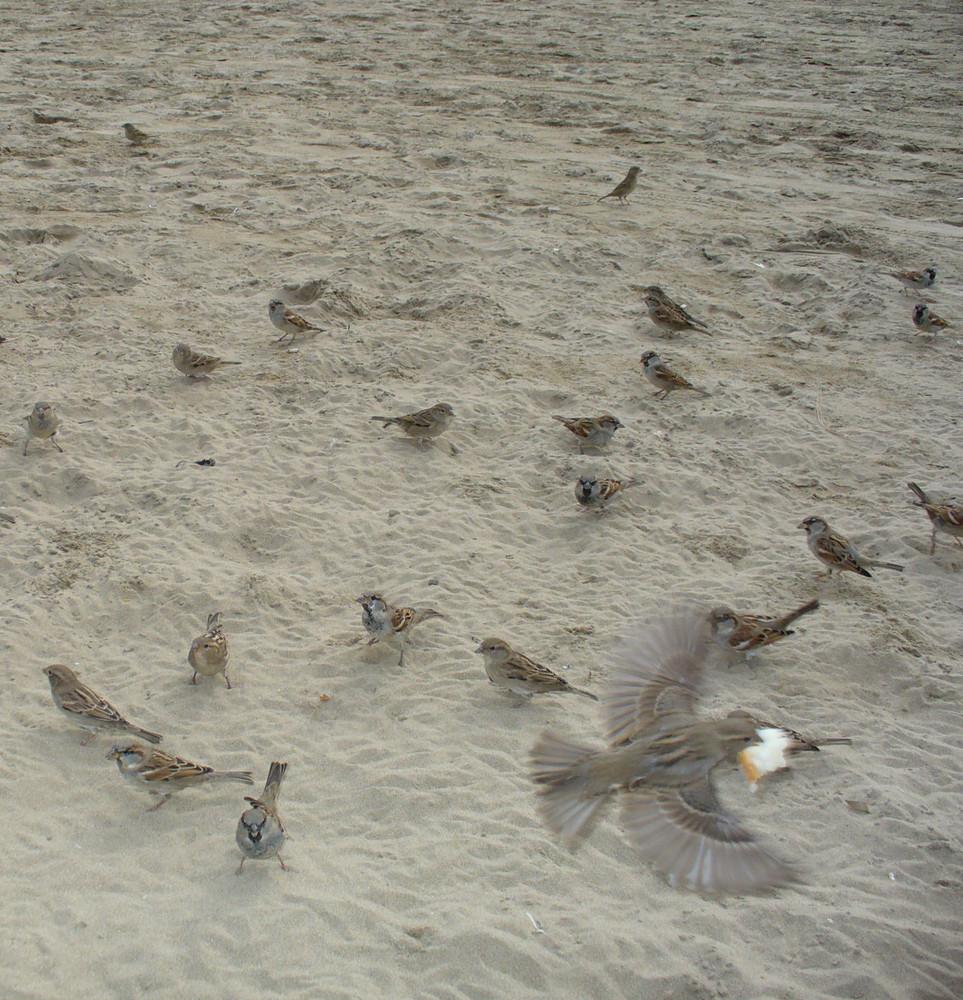 Unten Rechts will gerade ein Vögelchen wegfliegen die andern suchen Futter