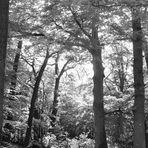 Unter Bäumen 3