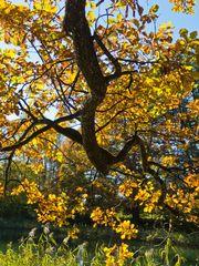 unter dem Blätterdach in warme Farben gehüllt