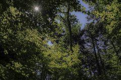 unter dem grünen Blätterdach