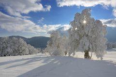 Unter dem Schnee- und Raureifpanzer