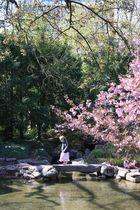 Unter den Kirschblüten