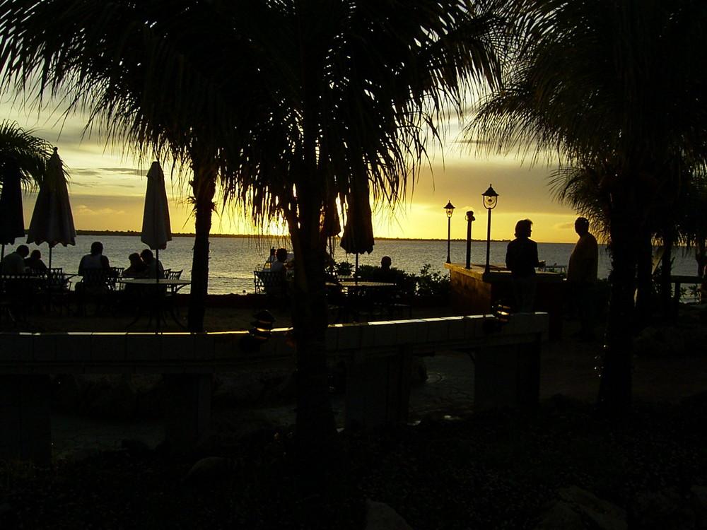 Unter den Palmen